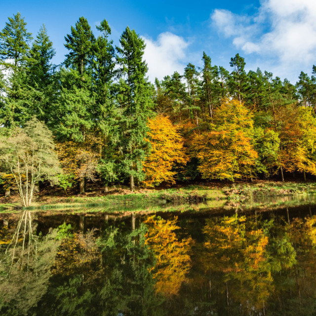 """""""Autumn at Soudley Ponds 8"""" stock image"""
