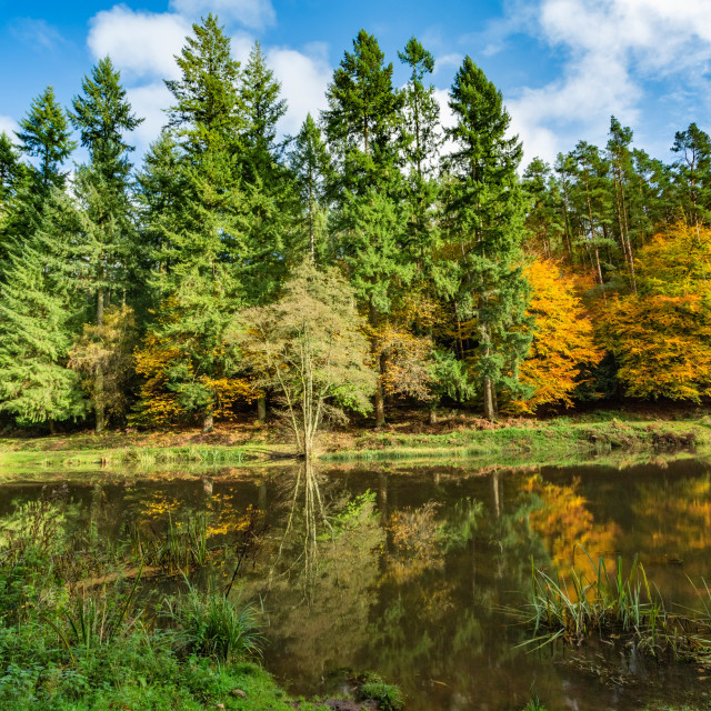"""""""Autumn at Soudley Ponds 9"""" stock image"""