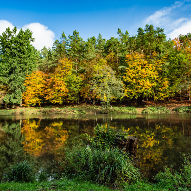 """""""Autumn at Soudley Ponds 7"""" stock image"""