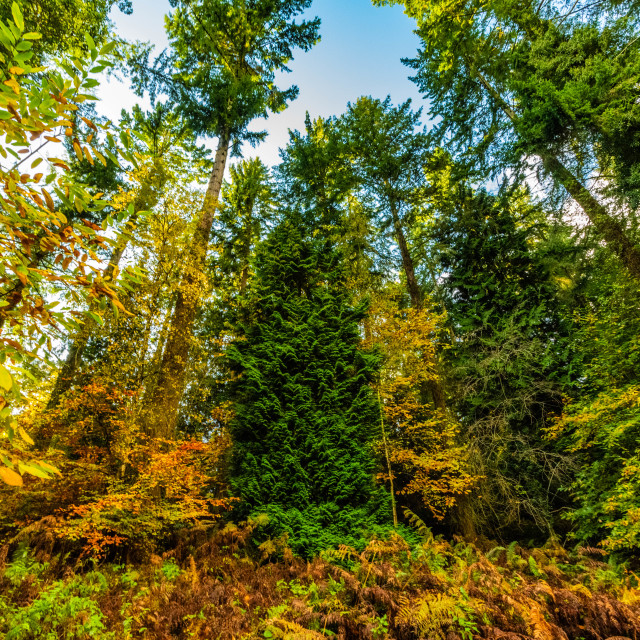"""""""Autumn at Soudley Ponds 13"""" stock image"""