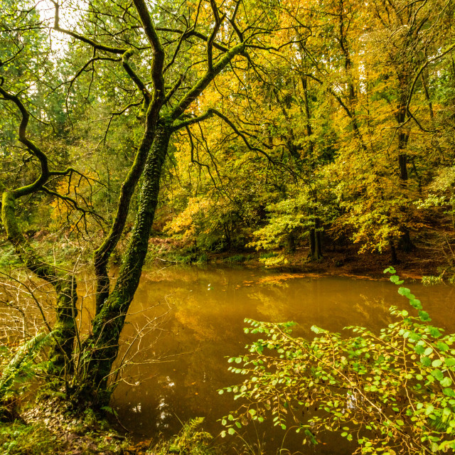 """""""Autumn at Soudley Ponds 12"""" stock image"""