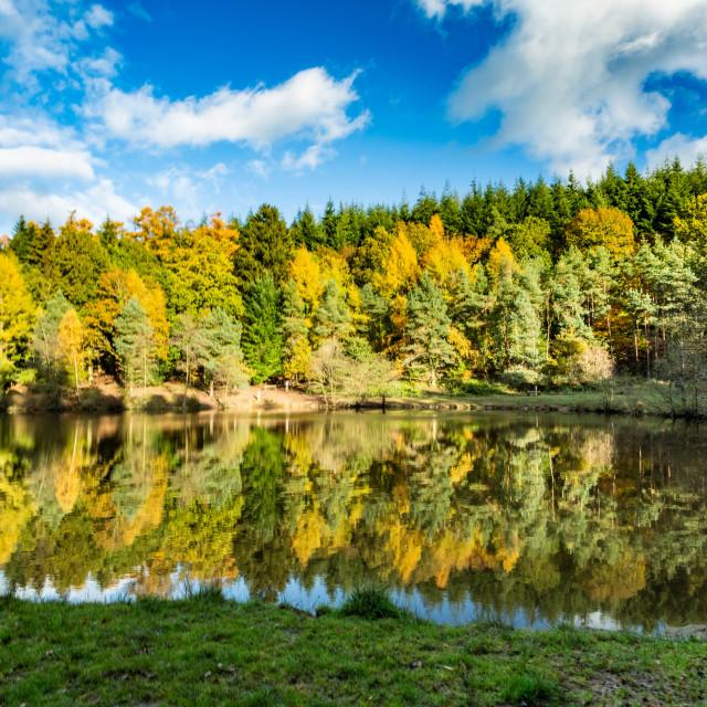 """""""Mallards Pike Lake 2"""" stock image"""