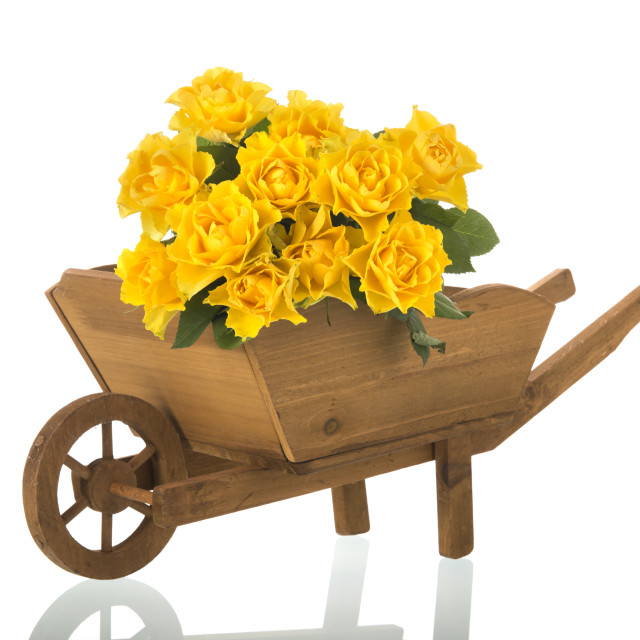 """Wheel barrow with yellow roses"" stock image"
