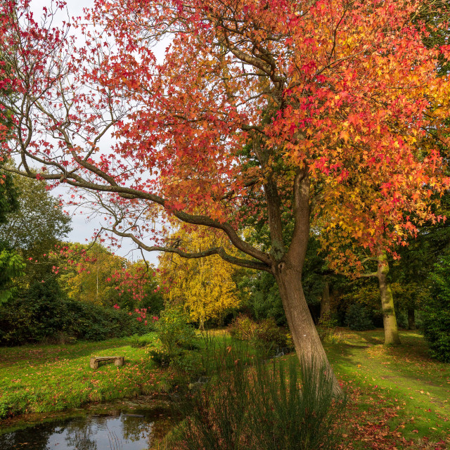 """""""A Tranquil England Autumn View"""" stock image"""