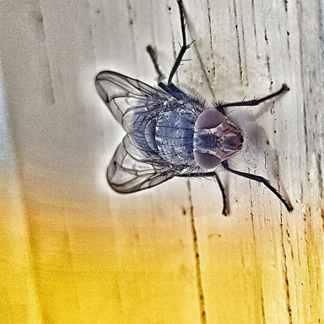"""""""Fly"""" stock image"""