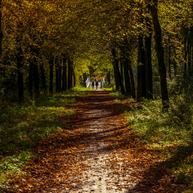 """Couple walking in autumn park"" stock image"