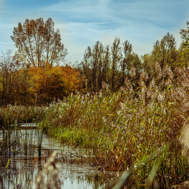 """""""Crystal clear creek in the National Park the Biesbosch"""" stock image"""