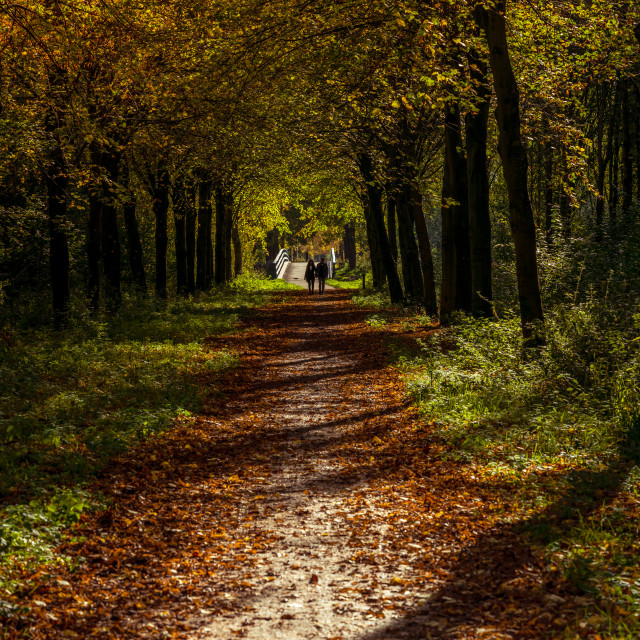 """""""Couple in autumn park, front view."""" stock image"""