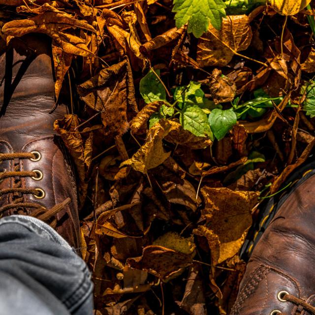 """Autumn season concept in rural Biesbosch"" stock image"