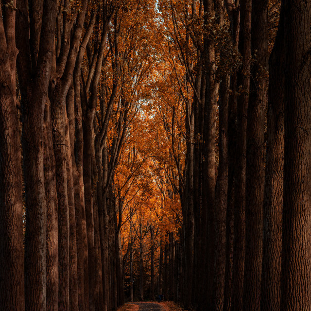 """Sunlight and autumn foliage"" stock image"
