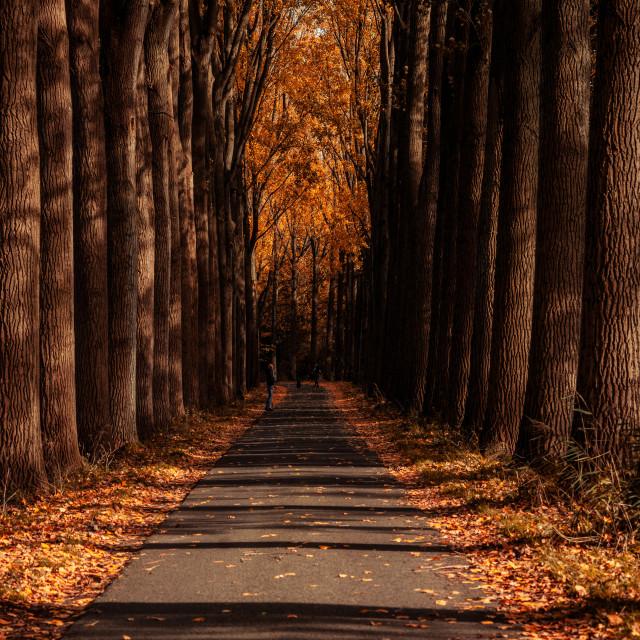 """Autumn season concept"" stock image"