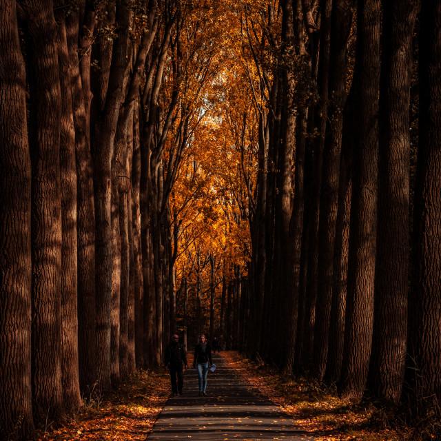 """Couple in autumn park,"" stock image"