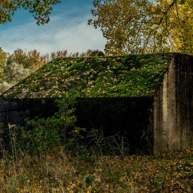 """Overgrown Dutch bomb shelter"" stock image"