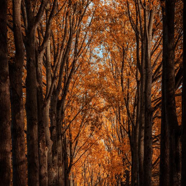 """Sun shining through the trees"" stock image"