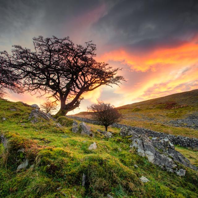 """""""tree sunrise"""" stock image"""