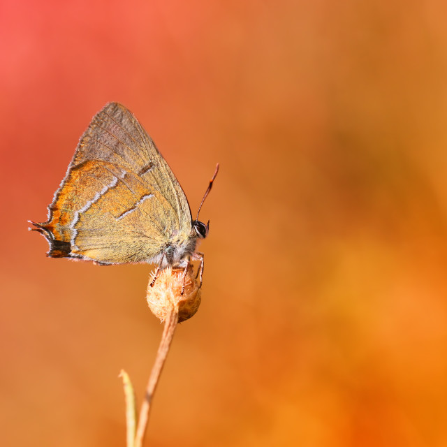 """A rare butterfly in my garden on an interesting background."" stock image"