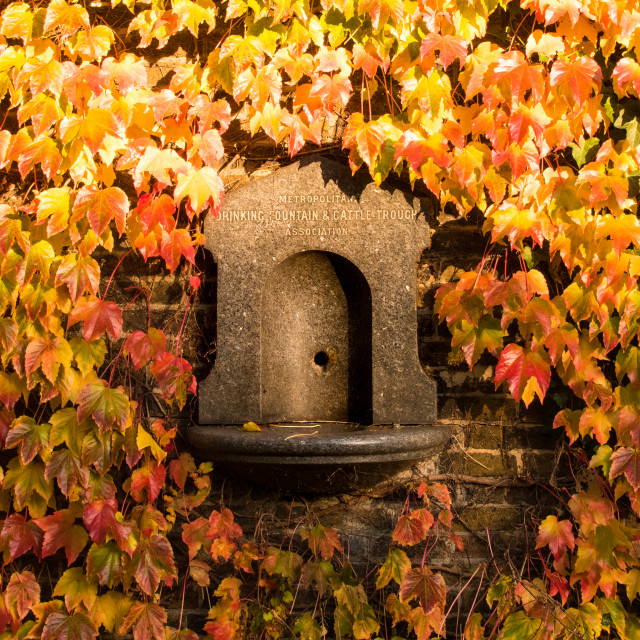 """""""Water fountain in Autumnal Leaves"""" stock image"""