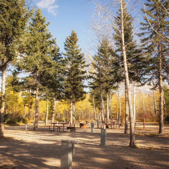 """""""A deserted campground with picnic tables and fire pits surrounded by tall autumn colored trees on a sunny fall afternoon landscape"""" stock image"""