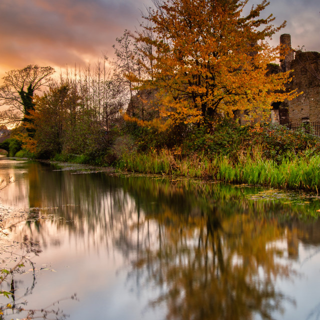 """""""tree on the canal"""" stock image"""