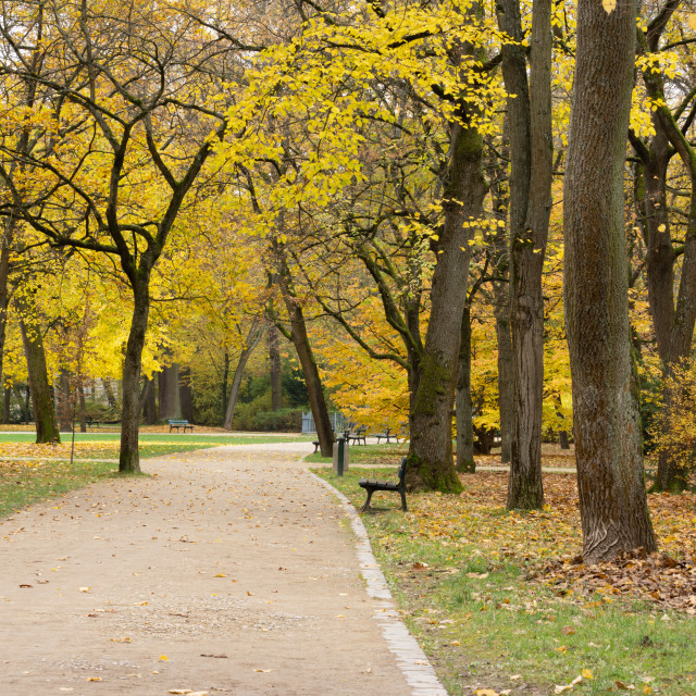 """""""A way to autumn"""" stock image"""