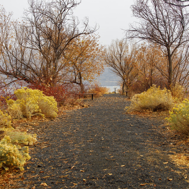 """""""Trail to the Edge of the Columbia River in Washington"""" stock image"""