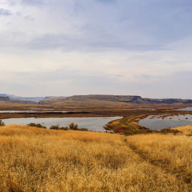 """Marsh Area of Columbia National Wildlife Refuge in Washington"" stock image"