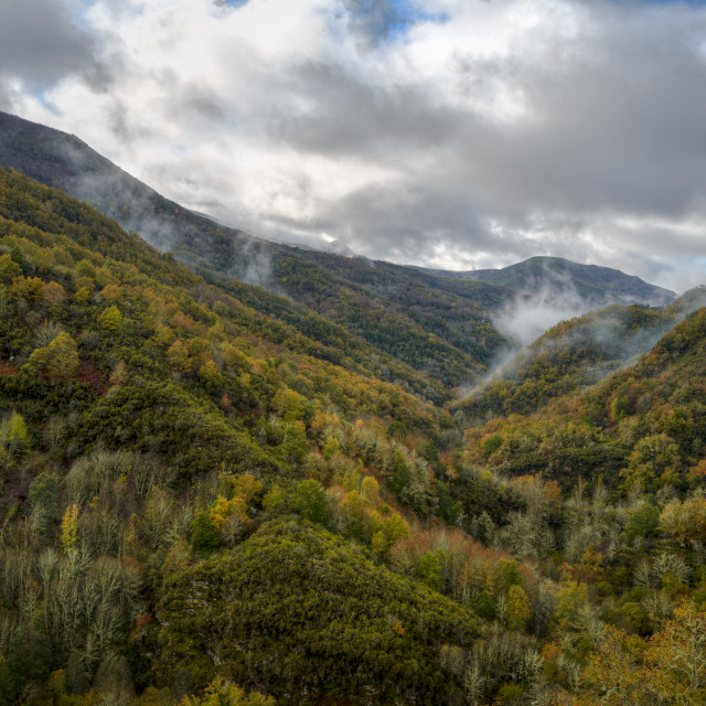"""""""Wooded Valleys wake up between Fog Shreds"""" stock image"""