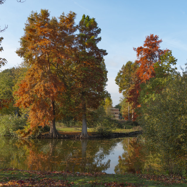 """Autumn Hues"" stock image"