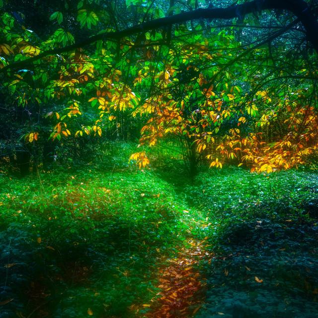 """""""Fantasy Essex Autumn Woods"""" stock image"""