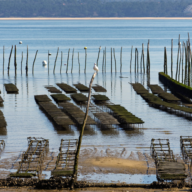 """""""Oyster farm"""" stock image"""