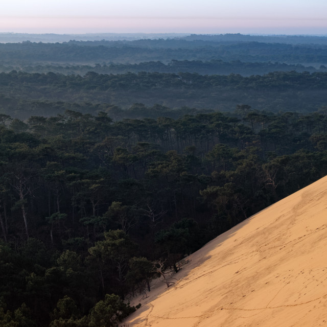 """""""Sand against forest"""" stock image"""