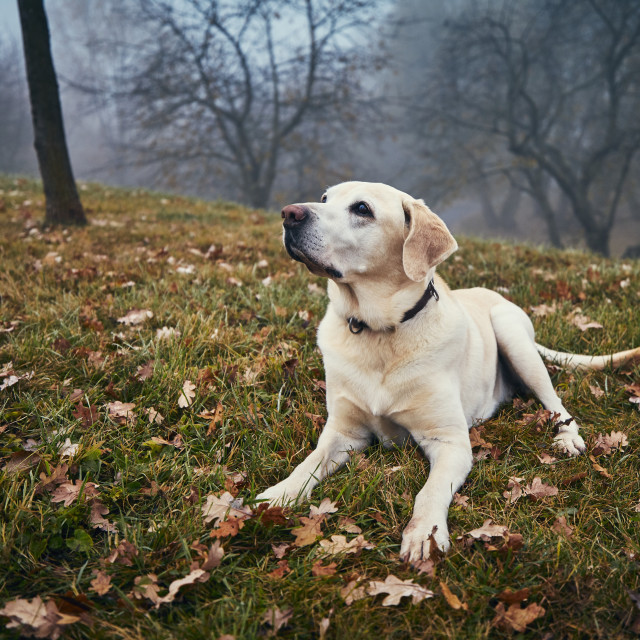 """Cute dog in autumn nature"" stock image"