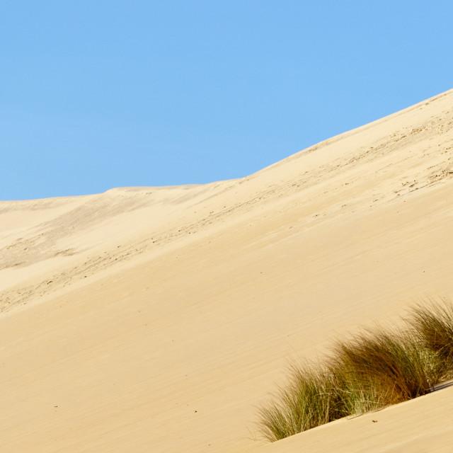 """Pilat dune"" stock image"