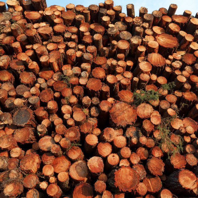 """Tree trunks"" stock image"