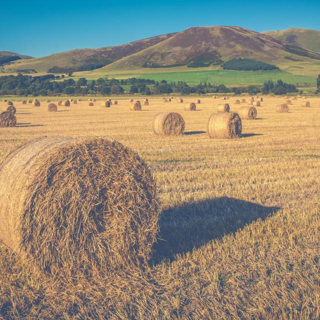 """Scottish Farming Scene"" stock image"