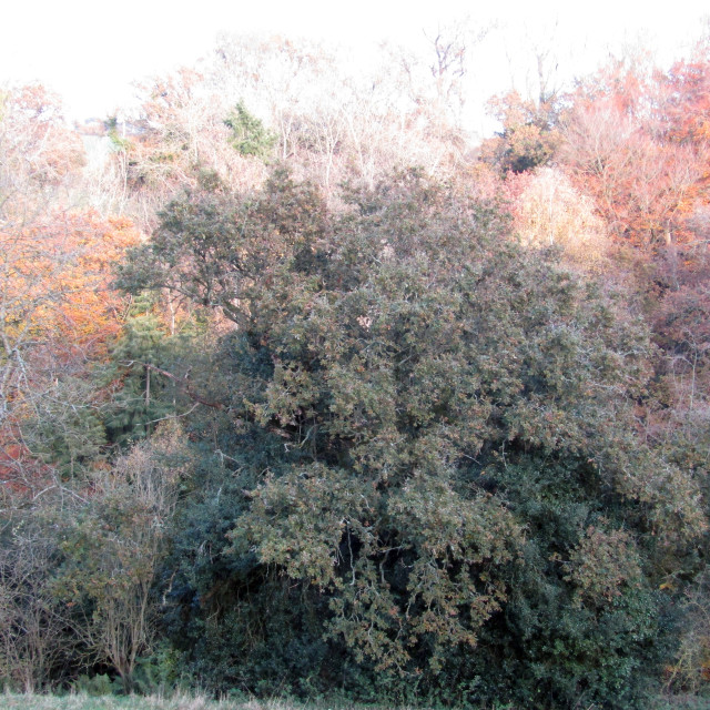 """""""Autumn tree lined sky in Quantock Hills, Somerset"""" stock image"""