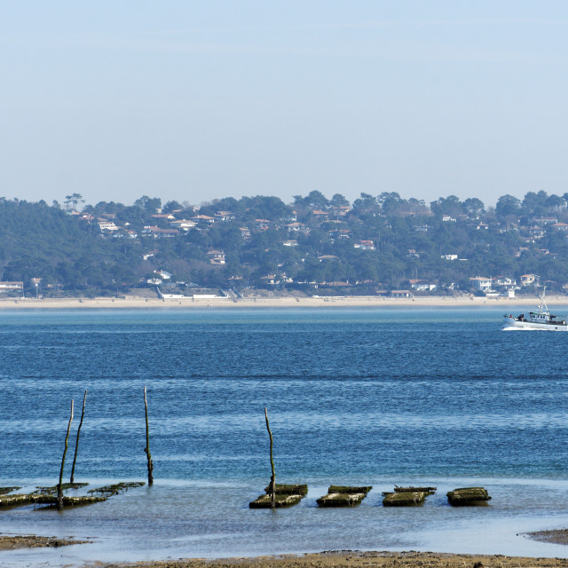"""""""Oyster farmin in the bay"""" stock image"""
