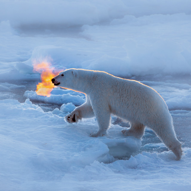 """Polar bear dragon"" stock image"