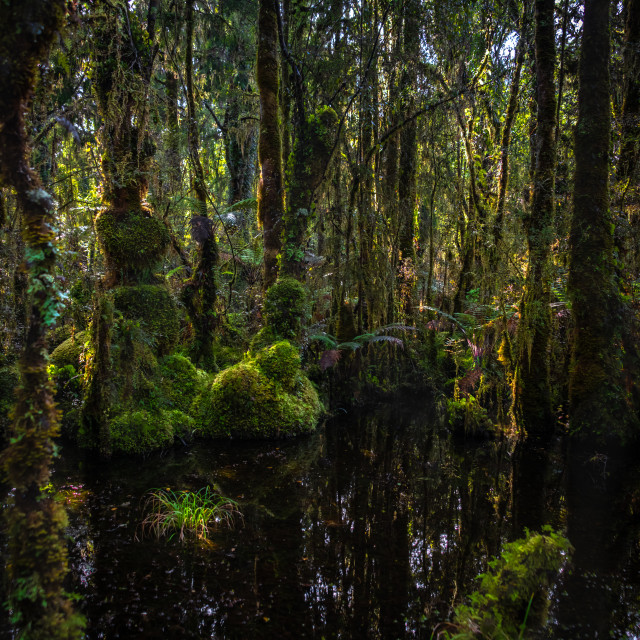 """""""In the Heart of the Rainforest"""" stock image"""