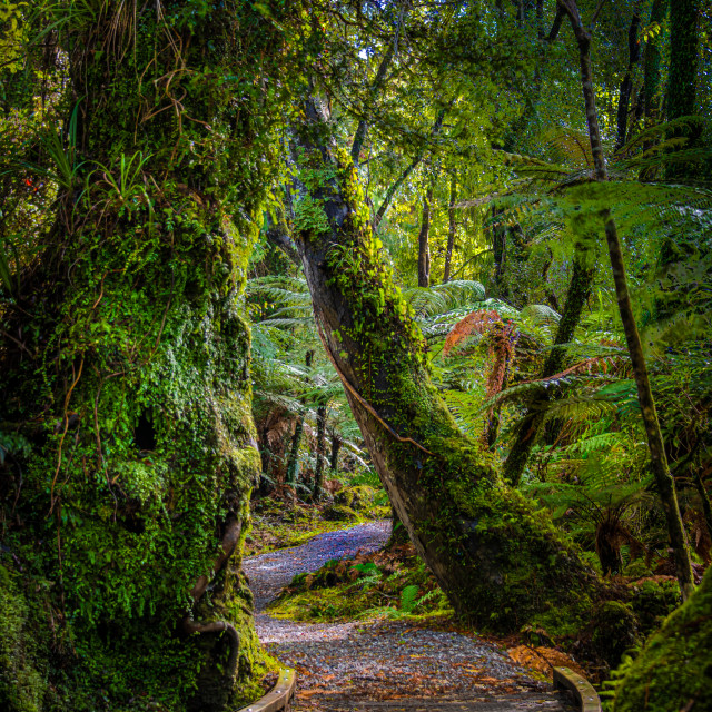 """Pathway of Serenity"" stock image"