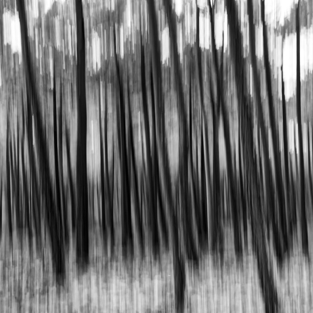 """""""Blur Forest"""" stock image"""