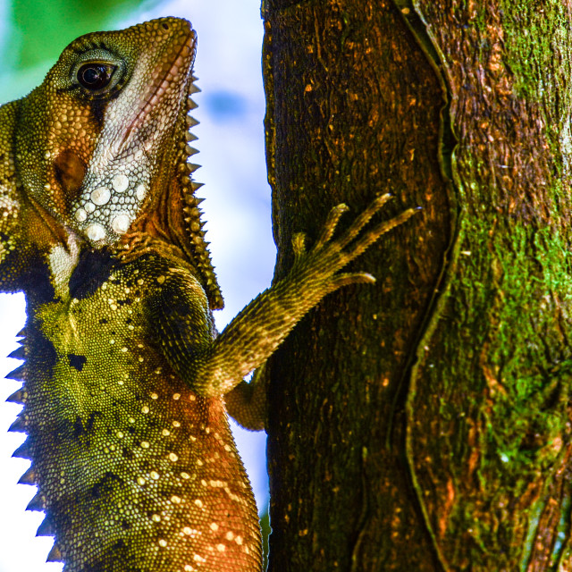 """""""Boyds Forest Dragon"""" stock image"""