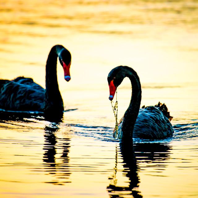 """On Golden Pond"" stock image"
