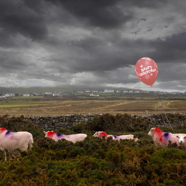 """""""Christmas sheep"""" stock image"""