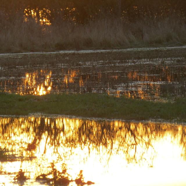 """Oxfordshire flooded field showing reflections at sunset"" stock image"