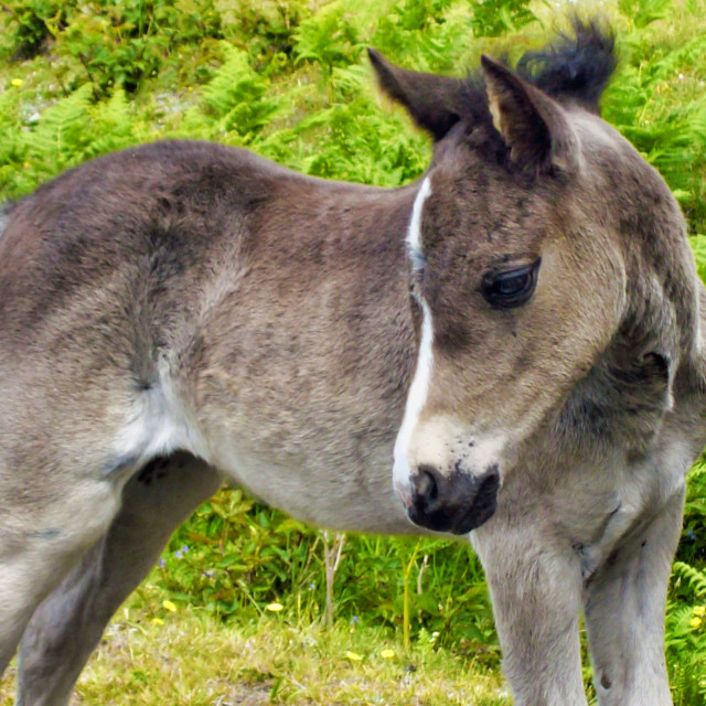 """Forest Foal"" stock image"