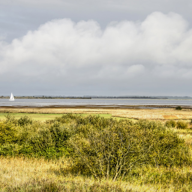 """Wetlands along lake Grevelingen"" stock image"