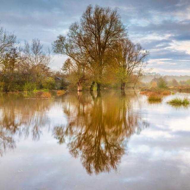 """flooded Llangorse"" stock image"