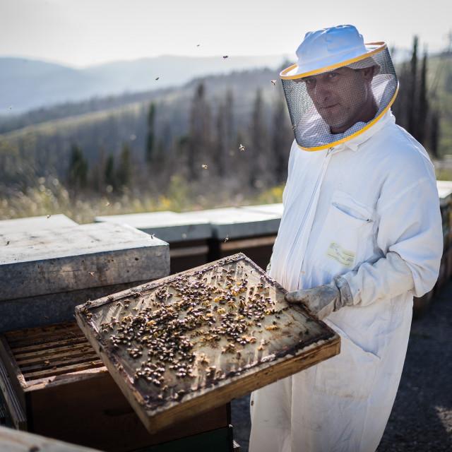 """The Beekeeper - Amiata Arts & Crafts"" stock image"