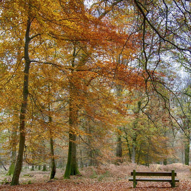 """New Forest Autumn Colours"" stock image"